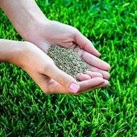 Подсев травы на газоне