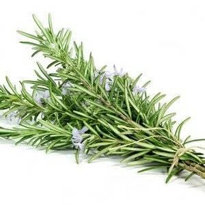 Пряные травы можно выращивать круглый год