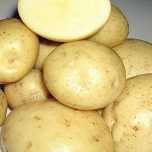 Сорт картофеля Святкова
