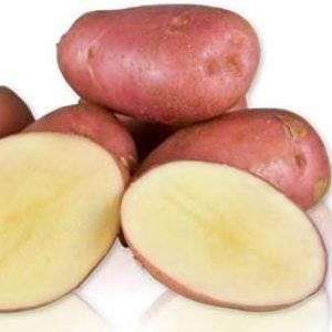 Сорт картофеля Дезире