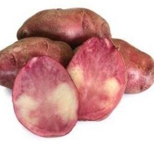 Сорт картофеля Малиновка