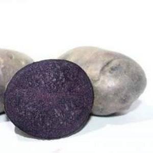 Сорт картофеля Солоха