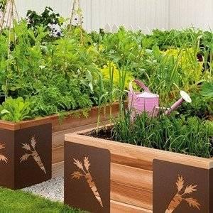 Высокие грядки позволяют выращивать разные растения