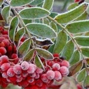 Растения нужно защищать от заморозков