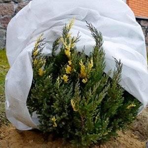 Защитить растения от заморозков поможет тонкое агроволокно