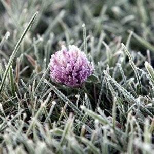 Замороженные растения можно реанимировать