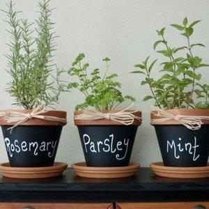 Ароматную зелень можно выращивать в горках