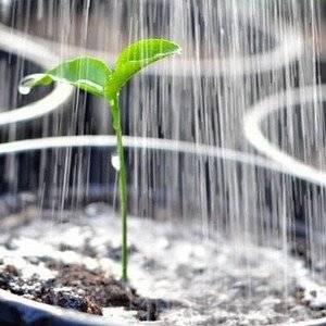 Перекись используют для дезинфекции растений