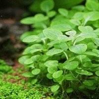 Факты о растениях