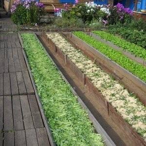 Метод Митлайдера под силу каждому садоводу