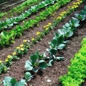 Метод Митлайдера используют на слабоплодородных почвах
