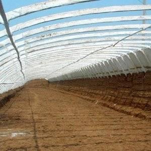 Солнечный вегетарий предназначен для выращивания клубники