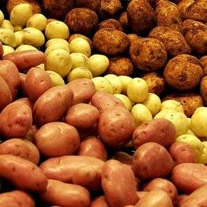 Для большого урожая картофель удобряют